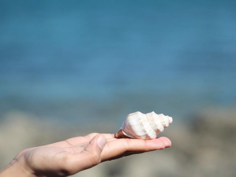 sea-shell-525851_1280